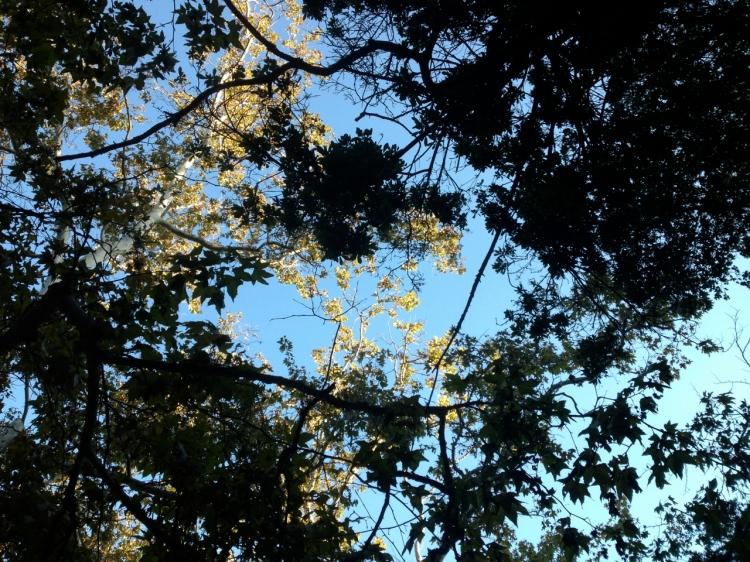 37 Through the Trees