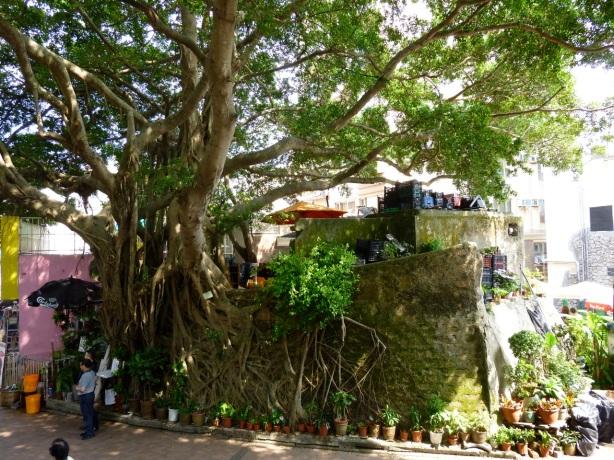 Stanley tree